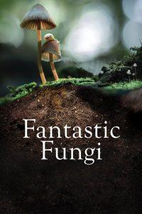 ดูสารคดี Fantastic Fungi (2019) เห็ดมหัศจรรย์